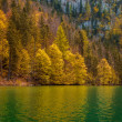 Autumn forest trees — Stock fotografie