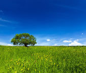 Green field scenery lanscape — Stock Photo
