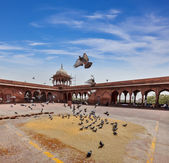 Pigeons in Jama Masjid mosque — Stock Photo