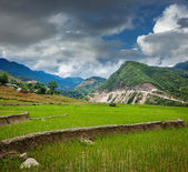Rice field terraces, Vietnam — Stock Photo