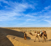 Cameleer with camels in dunes of Thar desert — Stok fotoğraf