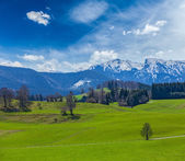 Idyllic pastoral countryside with Alps — Stock Photo