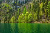 Green trees reflecting in lake — Stock Photo
