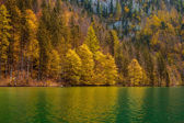 Autumn forest trees — Stock Photo