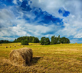 Hay bales on field — Stock Photo