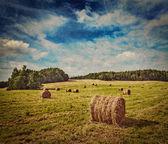 Heuballen auf Feld — Stockfoto