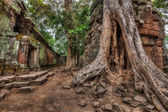 Ancient ruins and tree roots, Ta Prohm temple, Angkor, Cambodia  — Foto de Stock