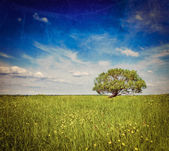 Spring summer green field scenery lanscape with single tree — Stock Photo