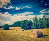 Hay bales on field — Stock Photo
