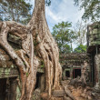Ancient ruins and tree roots, Ta Prohm temple, Angkor, Cambodia — Stock Photo #44920071