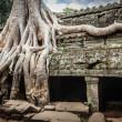 Ancient ruins and tree roots, Ta Prohm temple, Angkor, Cambodia — Stock Photo #44921503