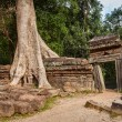 Ancient ruins and tree roots, Ta Prohm temple, Angkor, Cambodia — Stock Photo #44921807