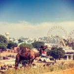 Camels at Pushkar Mela (Pushkar Camel Fair),  India — Stock Photo #44921945