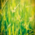 Green grass - shallow depth of field — Stock Photo #44922027