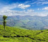 Plantacje herbaty zielonej w mieście munnar, kerala, indie — Zdjęcie stockowe