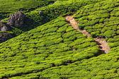 Zelené čajové plantáže v munnar, kerala, Indie — Stock fotografie
