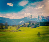 German idyllic pastoral countryside in spring — Stock Photo
