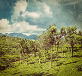 Green tea plantations in Munnar, Kerala, India — Stock Photo
