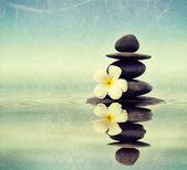 Zen stones with frangipani plumeria flower — Stock Photo