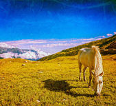 Horse grazing in Himalayas — Stock Photo