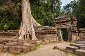 Ancient ruins and tree roots, Ta Prohm temple, Angkor, Cambodia  — Stock Photo