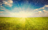 Sunset sun and green grass field — Stock Photo