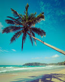 Idyllic beach with palm. Sri Lanka — Stock Photo