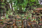 Ancient ruins and tree roots, Ta Prohm temple, Angkor, Cambodia  — Fotografia Stock