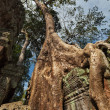 Ancient ruins and tree roots, Ta Prohm temple, Angkor, Cambodia — Stock Photo #45096407