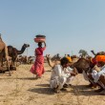 Indian men and camels at Pushkar camel fair (Pushkar Mela) — Stock Photo #45096135
