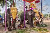 Zdobené slony s urozených — Stock fotografie