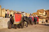Turystów jazda słonie w bursztynie — Zdjęcie stockowe