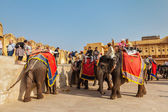 JAIPUR, INDIA - NOVEMBER, 18: Tourists riding elephants in Amber — Stock Photo