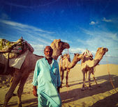 Cameleer (camel driver) with camels in dunes of Thar desert — Stock Photo