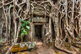 Ancient stone door and tree roots, Ta Prohm temple, Angkor — Foto de Stock