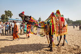 Camel decoration competition contest at Pushkar — Stock Photo