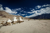 Chorten in Himalayas. Nubra valley, Ladakh, India — Stock Photo