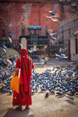 Indian woman in sari feeding pigeons in street — Stock Photo