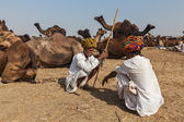 Indian men and camels at Pushkar camel fair (Pushkar Mela) — Stock Photo