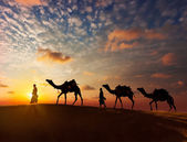 Two cameleers with camels — Foto Stock