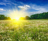 Summer blooming meadow field — Stock Photo