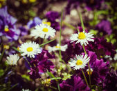 Blooming field flowers in spring — Stock Photo