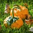 Foto de Stock  : Pumpkin