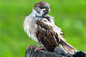 Птица — Стоковое фото