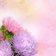 Aster flowers — Stock Photo #12871973