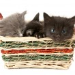 Three fluffy kittens — Stock Photo