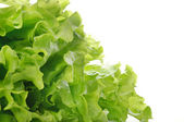 Green salad — Stockfoto