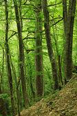 Bosque de la montaña — Foto de Stock