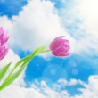 Tulip flowers and blue sky — Stock Photo