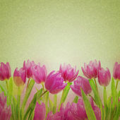 Tulip flowers on the white — Stock Photo